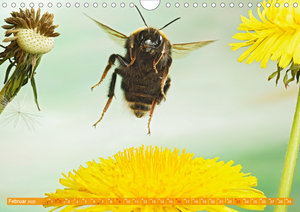 Sechs Beine in der Luft - Wildbienen im Flug (Wandkalender 2020