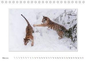 Emotionale Momente: Tiger - Kraft & Schönheit. / CH-Version (Tis