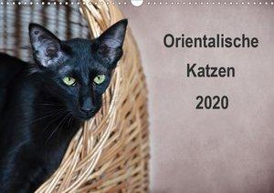 Orientalische Katzen