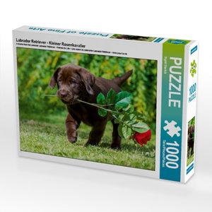 Labrador Retriever - Kleiner Rosenkavalier 1000 Teile Puzzle que