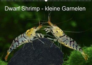 Dwarf Shrimp - kleine Garnelen
