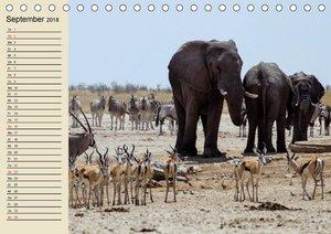 Wildes Leben in Botswana
