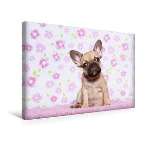 Premium Textil-Leinwand 45 cm x 30 cm quer Bully Welpe