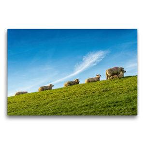 Premium Textil-Leinwand 75 cm x 50 cm quer Schafe auf dem Deich