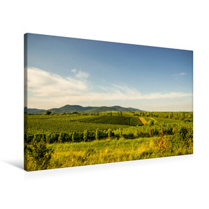 Premium Textil-Leinwand 90 cm x 60 cm quer Sonnenverwöhnte Reben