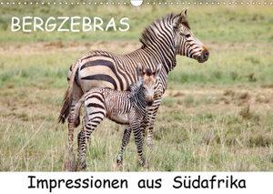 BERGZEBRAS Impressionen aus Südafrika