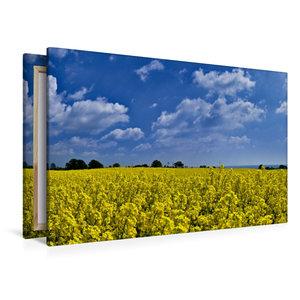 Premium Textil-Leinwand 120 cm x 80 cm quer Im Rapsfeld