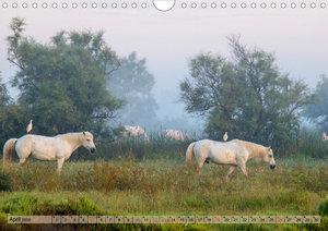 Camargue - Der wilde Süden Frankreichs