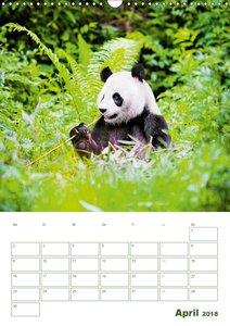Pandas: Knuddelige Bambusbären