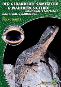 Der Gebänderte Samtgecko und Wahlbergs Gecko
