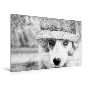 Premium Textil-Leinwand 120 cm x 80 cm quer Border Collie Bild a