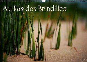 Au Ras des Brindilles (Calendrier mural 2015 DIN A3 horizontal)
