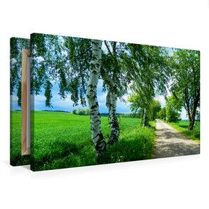 Premium Textil-Leinwand 75 cm x 50 cm quer Saftiges Grün