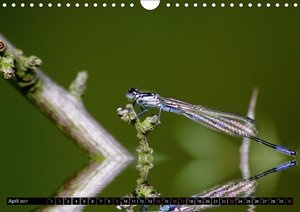 Im Reich der Libellen