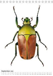 Die schönsten Käfer