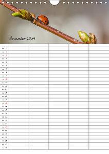 Glückskäfer / Familienplaner (Wandkalender 2019 DIN A4 hoch)
