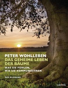 Das geheime Leben der Bäume
