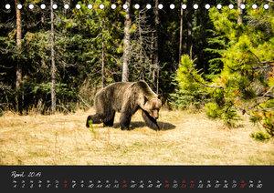 Oh Canada... 2019 (Tischkalender 2019 DIN A5 quer)