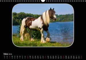 Gypsy Horses (Wandkalender 2019 DIN A3 quer)