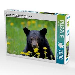 CALVENDO Puzzle Schwarzer Bär in der Nähe von Prince George 1000