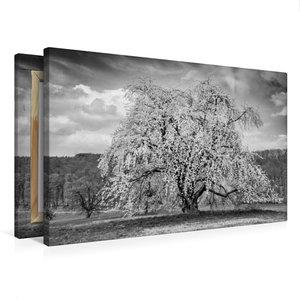 Premium Textil-Leinwand 75 cm x 50 cm quer Baumwunder