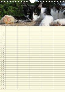 Familienplaner Katzen