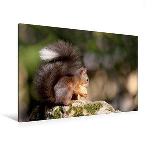 Premium Textil-Leinwand 120 cm x 80 cm quer Eichhörnchen knabber