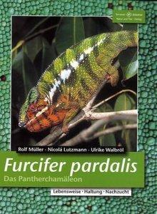 Furcifer pardalis. Das Panterchamäleon