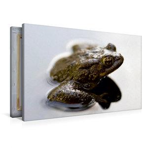 Premium Textil-Leinwand 90 cm x 60 cm quer Frosch