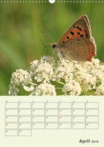 Schmetterlinge - fliegende Schönheiten (Wandkalender 2019 DIN A3