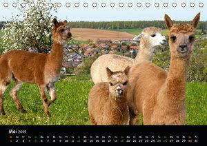 Alpakas zum Verlieben (Tischkalender 2019 DIN A5 quer)