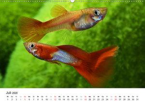 Beliebte Fische der Welt (Wandkalender 2020 DIN A2 quer)
