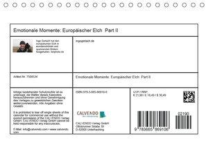 Emotionale Momente: Europäischer Elch Part II