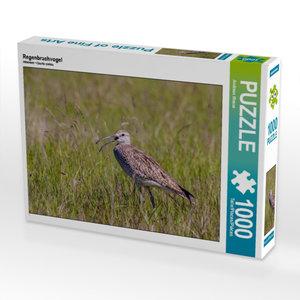 Regenbrachvogel 1000 Teile Puzzle quer