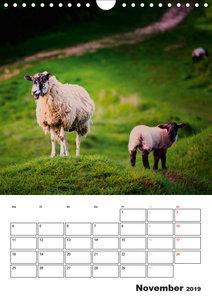Schafe und ihre Lämmer / Planer (Wandkalender 2019 DIN A4 hoch)