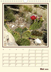 Wilde Kakteen Amerikas (Wandkalender 2020 DIN A4 hoch)