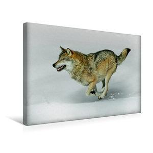 Premium Textil-Leinwand 45 cm x 30 cm quer Wolf verfolgt Beute