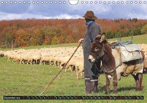 Das liebe Vieh (Wandkalender 2019 DIN A4 quer)