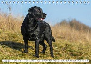 Labrador Retriever - Freunde für\'s Leben (Tischkalender 2019 DI