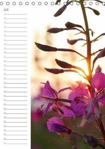 Malerisches Teufelsmoor (Tischkalender immerwährend DIN A5 hoch)
