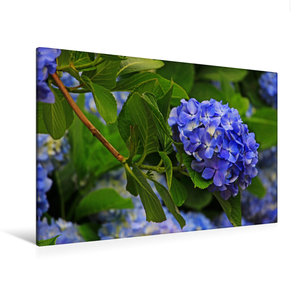 Premium Textil-Leinwand 120 cm x 80 cm quer Blaue Hortensien als