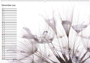 Filigrane Pusteblumen / Geburtstagskalender