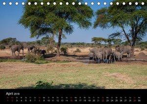 Botswanas Könige - Elefanten im Chobe Nationalpark