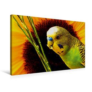 Premium Textil-Leinwand 75 cm x 50 cm quer Naturwellensittich