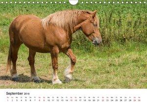 Alte Nutztierrassen 2018 (Wandkalender 2018 DIN A4 quer)