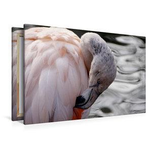 Premium Textil-Leinwand 120 cm x 80 cm quer Chile Flamingo