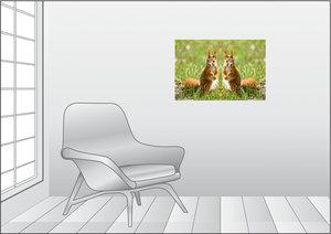 Premium Textil-Leinwand 75 cm x 50 cm quer Eichhörnchen Zwilling