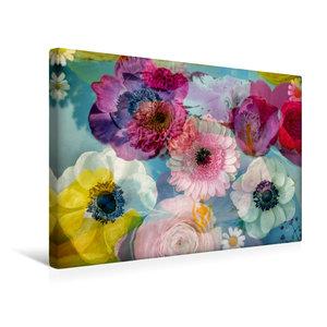 Premium Textil-Leinwand 45 cm x 30 cm quer Anemonen in Wasser