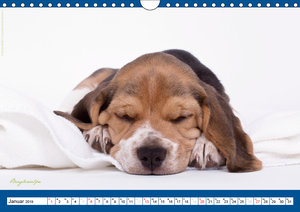 Charity for Dogs - der Kalender zum Wohle unserer Hunde (Wandkal