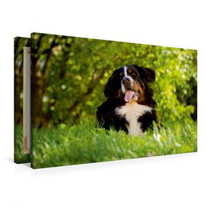 Premium Textil-Leinwand 90 cm x 60 cm quer Berner Sennenhund